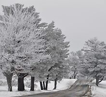 Country Road On Christmas Morning by Lana D'Attilio