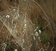 Wicked Web by Tia Allor-Bailey
