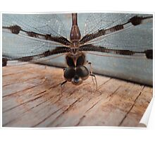 Dragonfly in Garage Poster
