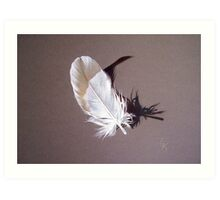 Feather & shadow #1 Art Print