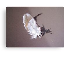 Feather & shadow #1 Metal Print