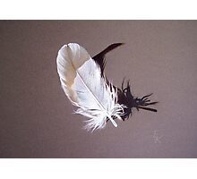 Feather & shadow #1 Photographic Print