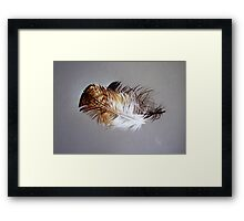 Feather & shadow #2 Framed Print