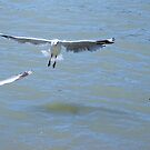 Three Gulls and a River by Kazzii