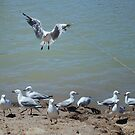 See Gulls On The River by Kazzii