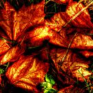 Winter Leaves II ~ Port Townsdend, WA ~ HDR Series by lanebrain photography