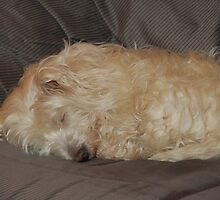 My dog Crumb by trainmaniac