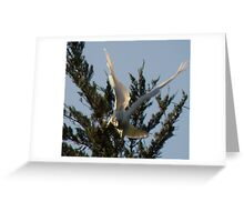 Forgot!! I Can Fly! Cocky Capers 7 Greeting Card