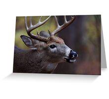 Big 10-pointer - White-tailed Deer Greeting Card