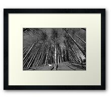 Thousand Trees Framed Print