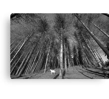 Thousand Trees Canvas Print