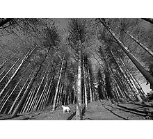Thousand Trees Photographic Print