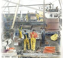 Sorting the catch by Steven  Hope