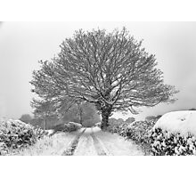 Winter Farm Lane Tree Photographic Print