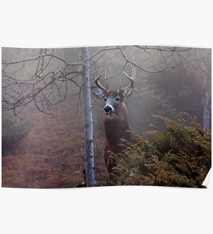 Big necked buck - White-tailed Deer Poster