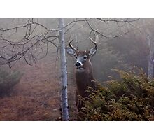 Big necked buck - White-tailed Deer Photographic Print
