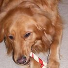 A Candy Cane From Santa by Marie Sharp