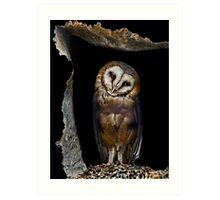 Shy owl  Art Print