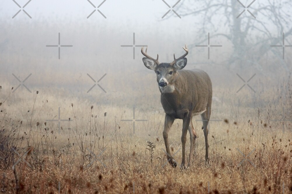 Coming through the fog - White-tailed Deer by Jim Cumming