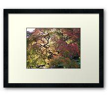 Tree  /  Holmdel Aboretum  Framed Print