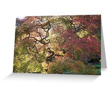 Tree  /  Holmdel Aboretum  Greeting Card