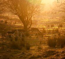 Does & Deers in Sunset by Marjolijn Barten