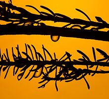 Nature Abstract by Marc Garrido Clotet