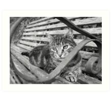 Silver tabby black and white Art Print