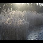 Winter in Holland3 by foppe47