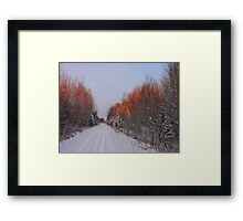 Christmas Eve Sunset on The Trees Framed Print