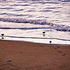 Waders on the Shore by David Bradbury