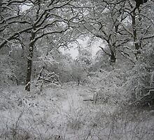 Snow in Epping Forest, Essex by Rodka