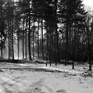 Stapleford Woods BW by Darren Peet