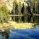 """""""Icy Pond"""" by Lynn Bawden"""