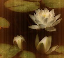 Water Lilies by Barbara  Brown