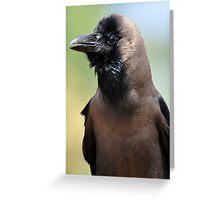 Mr Bird Greeting Card