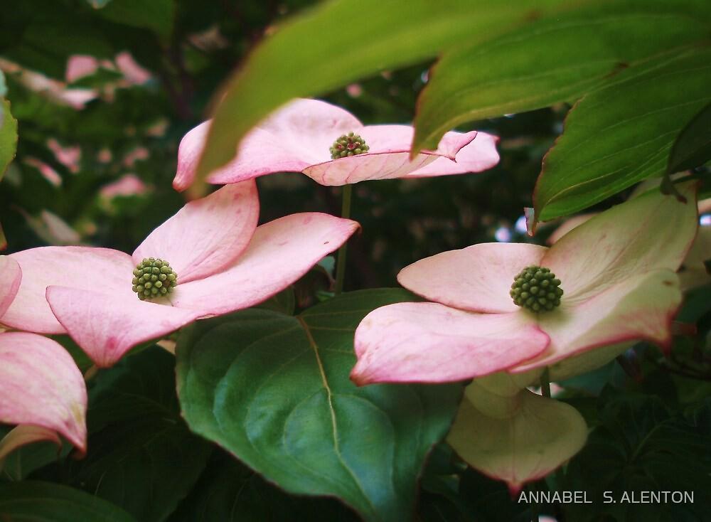flowering dogwood by ANNABEL   S. ALENTON