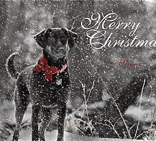 Merry Christmas ~ Sienna by Lori Deiter