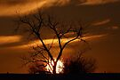 Fireball Sunset tree by Jim Cumming