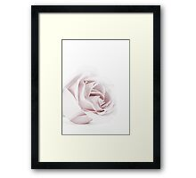The Pink Rose Framed Print