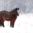 Brown on White - Horse by Jim Cumming