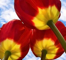 Great Reds And Yellows by Corinne Noon
