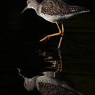 Greater Yellowlegs by Jim Cumming