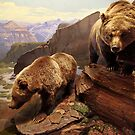 Grizzly Bears - Museum of Nature  by Jim Cumming