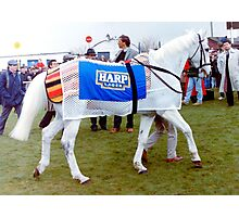 Desert Orchid at Downpatrick 1992 Photographic Print