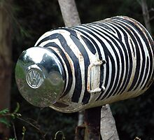 Zebra Mail - NSW by CasPhotography