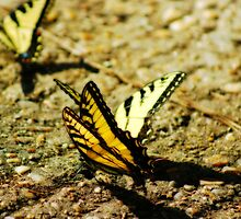 Butterfly Party by Linda Yates