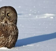 Great Grey Owl casts a long shadow Sticker