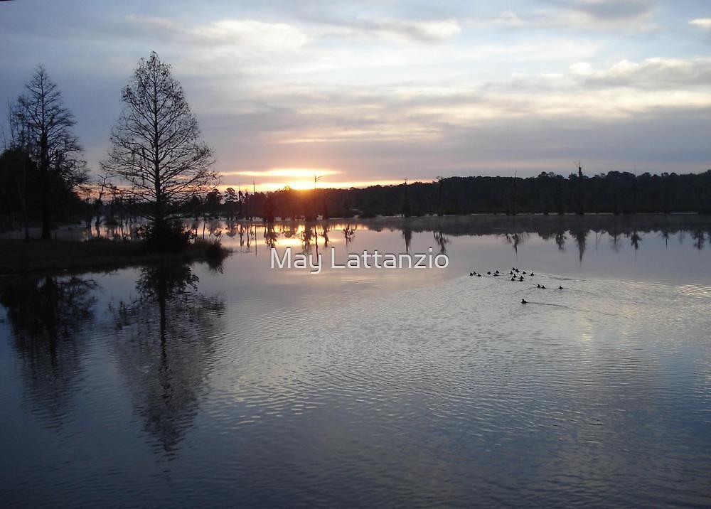 Bear Creek, Bayou George, Fl, December 26, 2009 by May Lattanzio