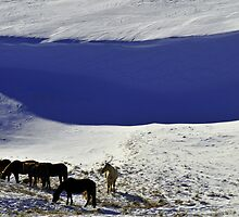 Snow Shadow by Donna Ridgway